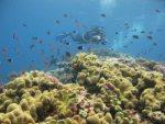 BABOU COTE OCEAN