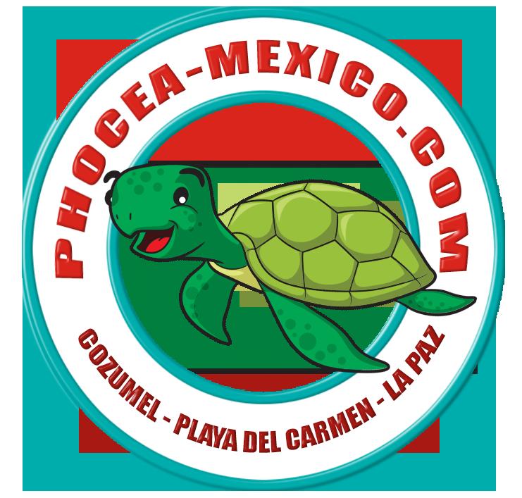 Phocea Mexico Playa Del Carmen