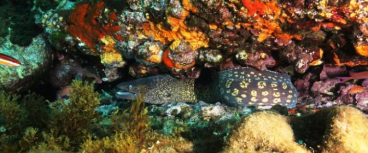 EDEN DIVE à la CIOTAT : à suivre en plongée et sur le terrain de l'écoresponsabilité