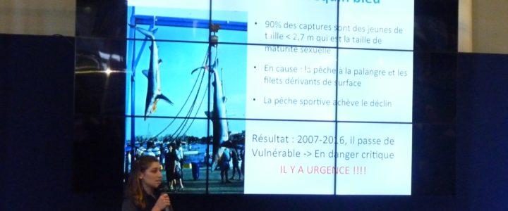 Programme Requins & Raies : les Résultats 2017 à découvrir en vidéo