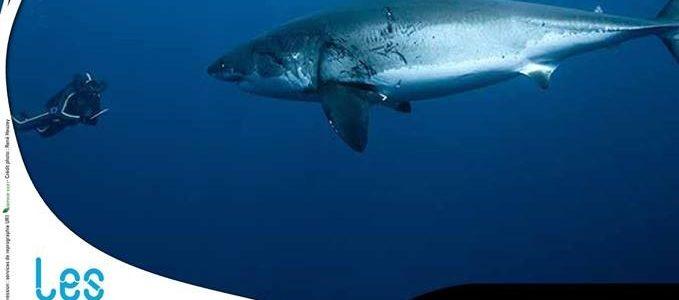Les Requins, au-delà du mythe, une conférence de Marie Abel