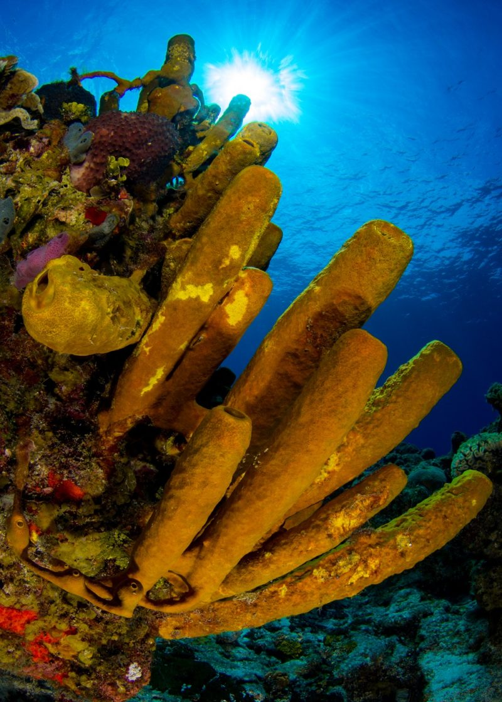 Phocea Mexico Cozumel