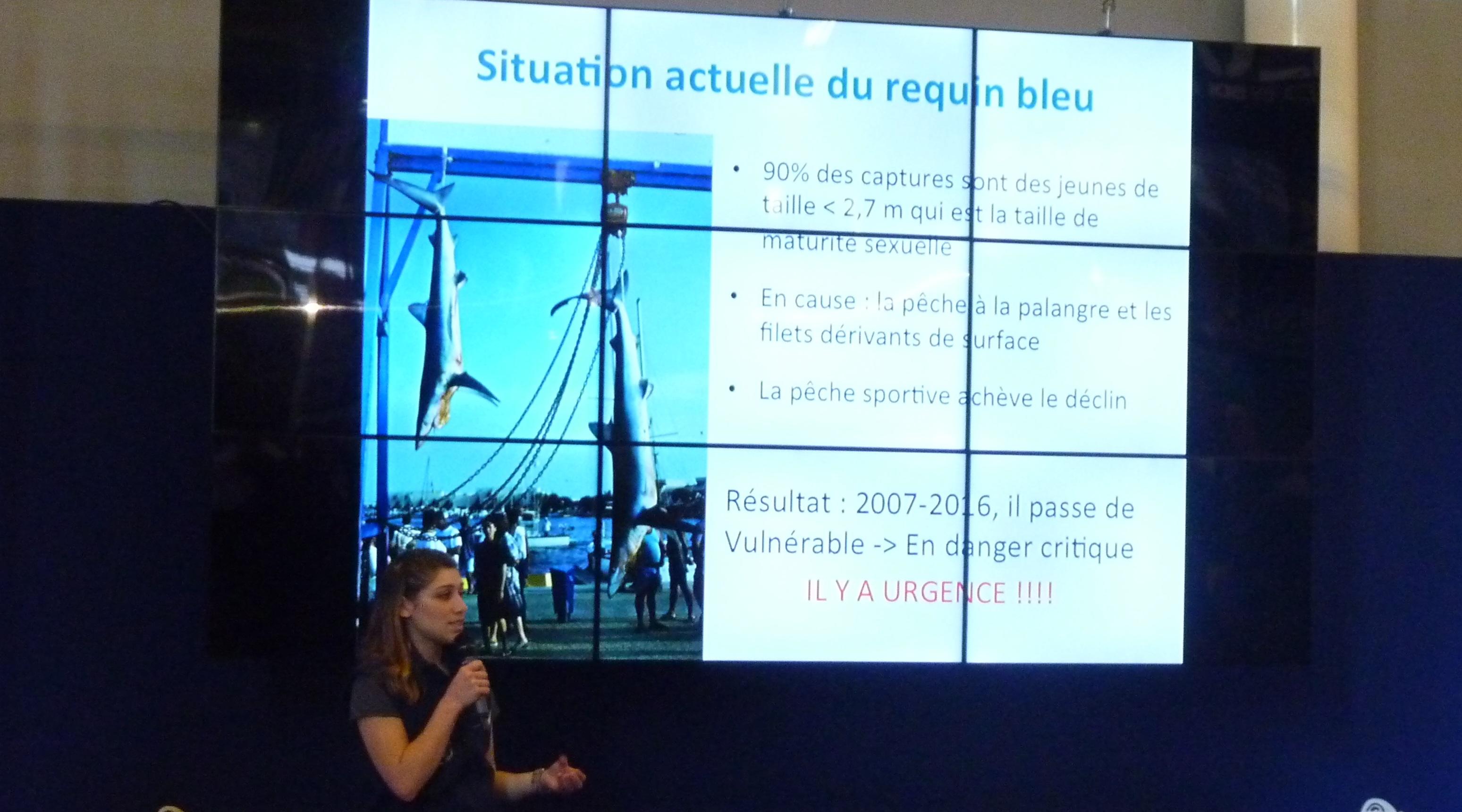 """Marie Abel, nouvelle coordinatrice du programme """"requins"""" de Longitude 181"""