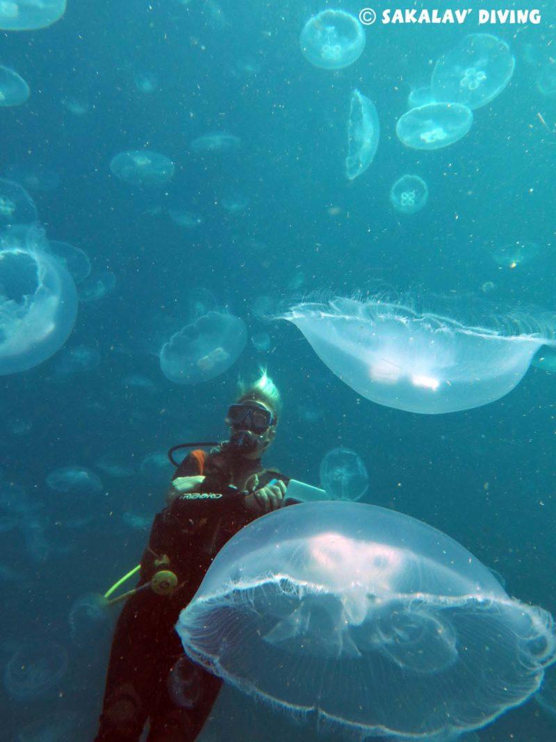Sakalav Diving