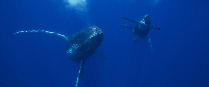 La Réunion, une approche respectueuse des animaux marins
