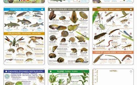 Semaine Bio au Lac d'ANNECY, conférence et collecte déchets