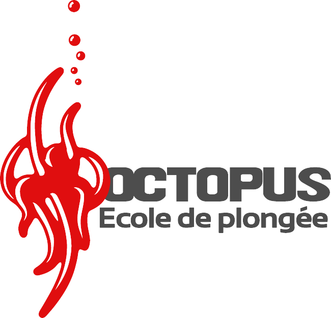 Octopus Soignies