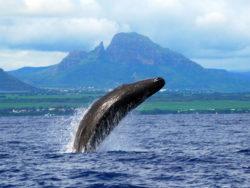 Votre don et votre voix à l' Océan  avant le 31 Décembre  !