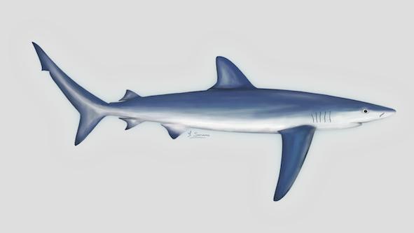 Rejoignez la campagne : Pas de requin dans mon assiette !