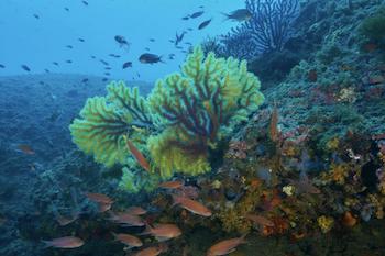 Aquatica Illes Medes