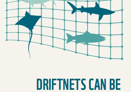 Requins en crise : le WWF alerte sur l'état critique des requins de Méditerranée