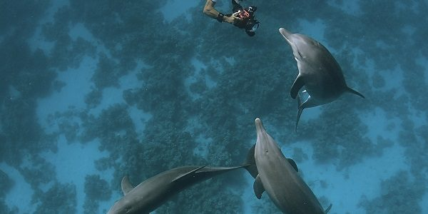 Avec TURSIOPS, des stages écovolontaires au plus près des dauphins..