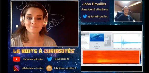 """Vulgarisation scientifique : les cachalots sur """"La boîte à curiosité"""""""